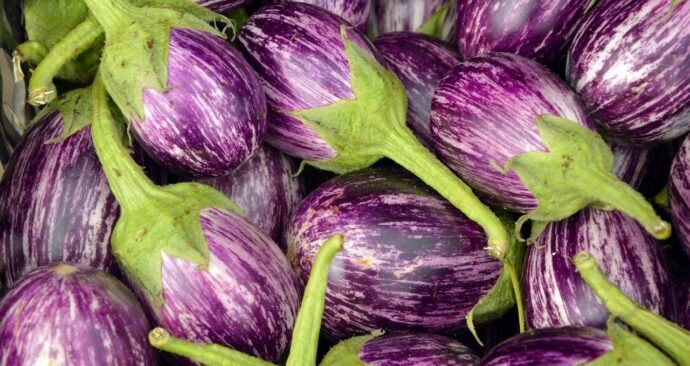 eggplant-3758698_1280