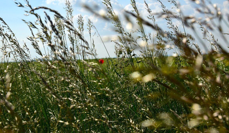 grasses-1438154_1280