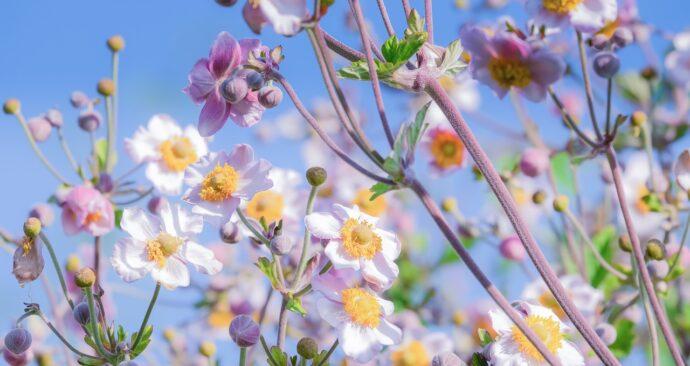 blossom-4384646_1280