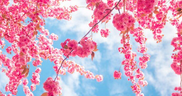 spring-2545809_1280