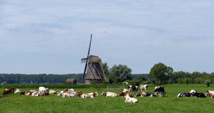 cow-4322118_1280