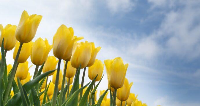 yellow-2293859_1280