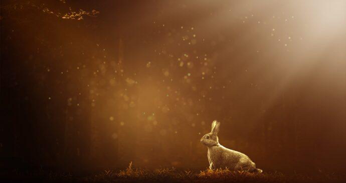 hare-3497805_1920
