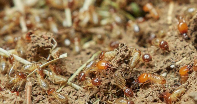 termites-3367347_1920