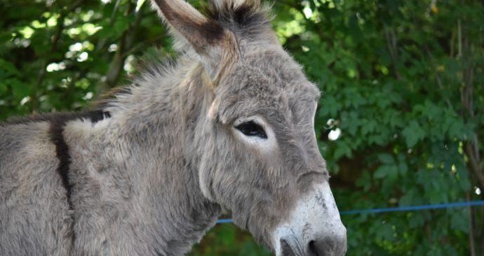 donkey-4214065_1920