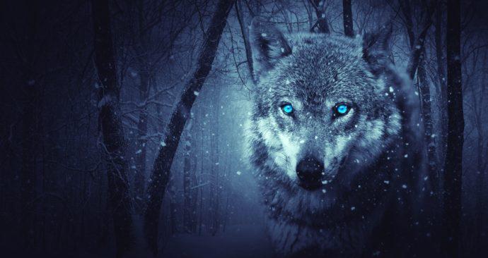 wolf-2227541_1920