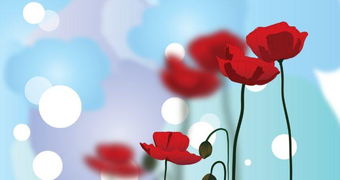 poppy-596569_1920