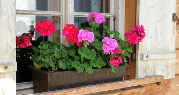 flower-box-466049_1920