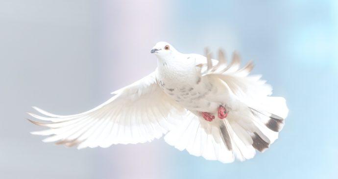 dove-2680487_1920-1