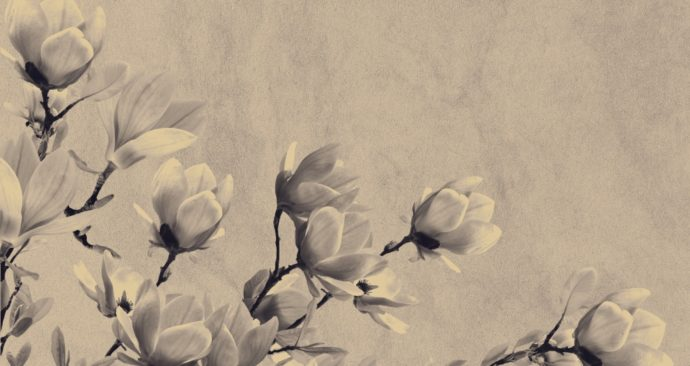 background-1425783_1920