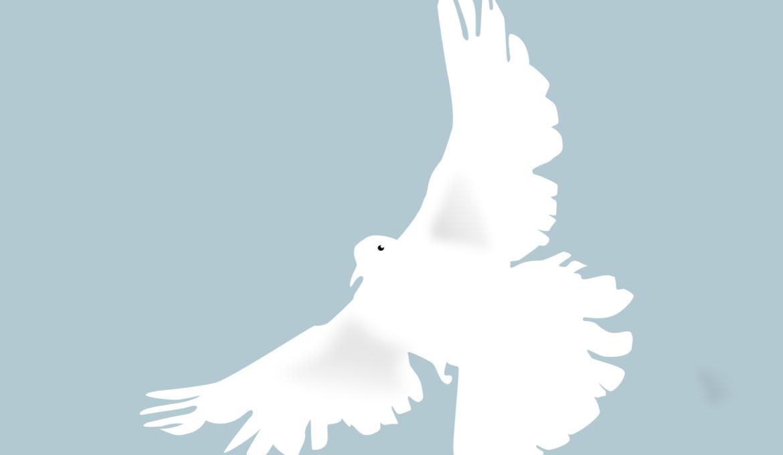 dove-153116