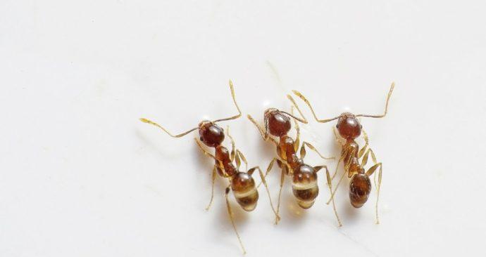 ants-498731_1920