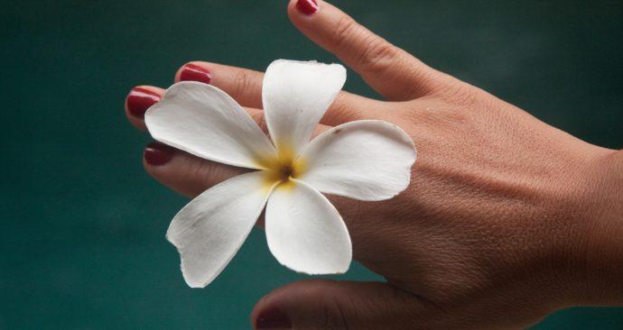 flower-1531824_1920