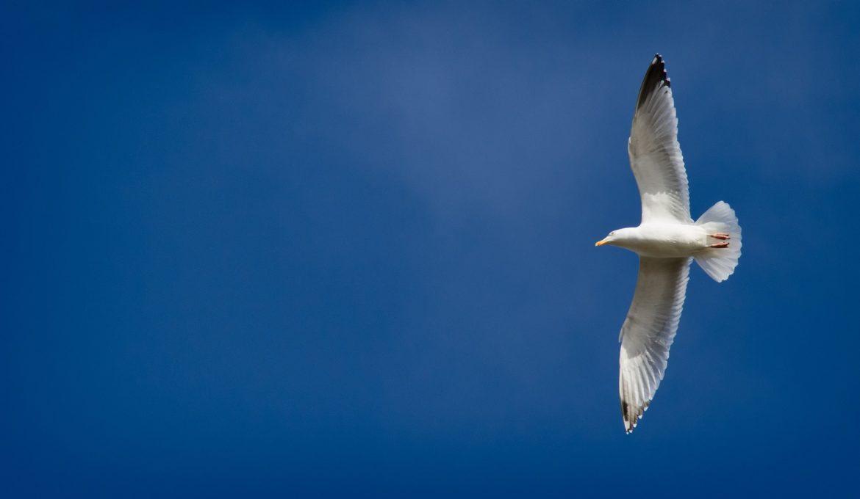 seagull-1385794_1920