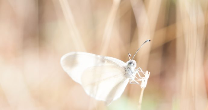 dragonfly-918571_1920