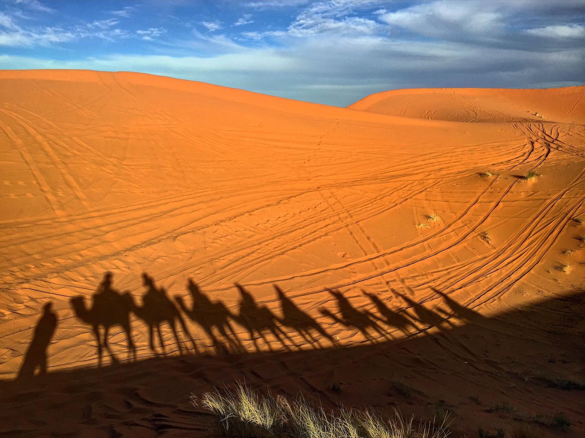 camels-2302245_1920