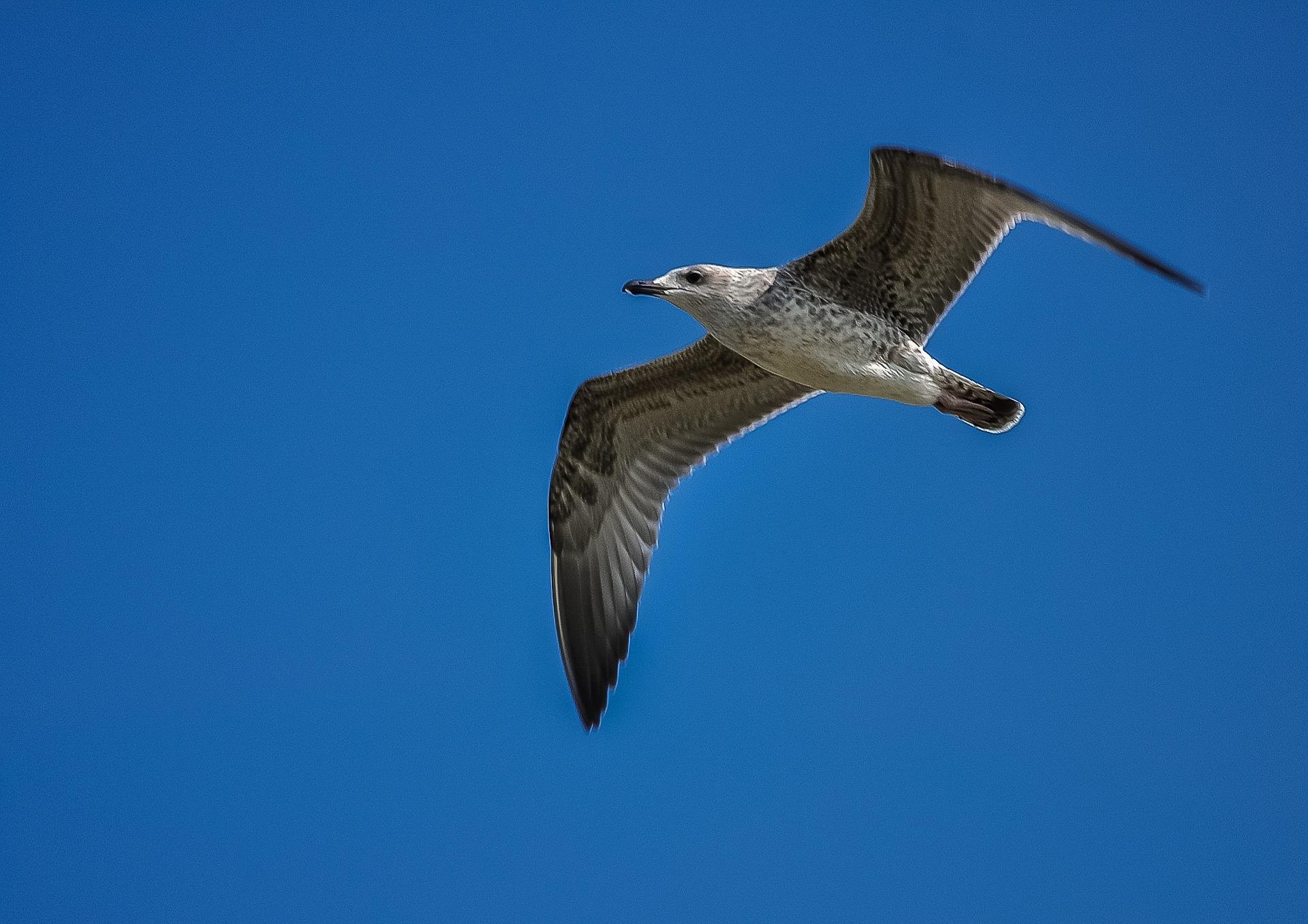 seagull-416130_1920