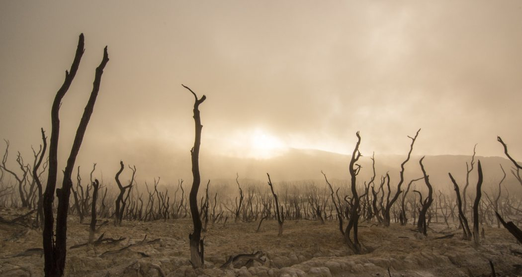 dead-trees-947331_1920