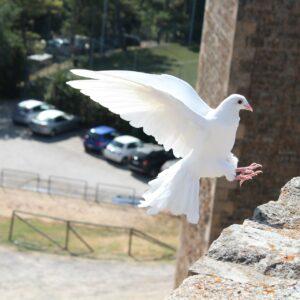 bird-465816_1920
