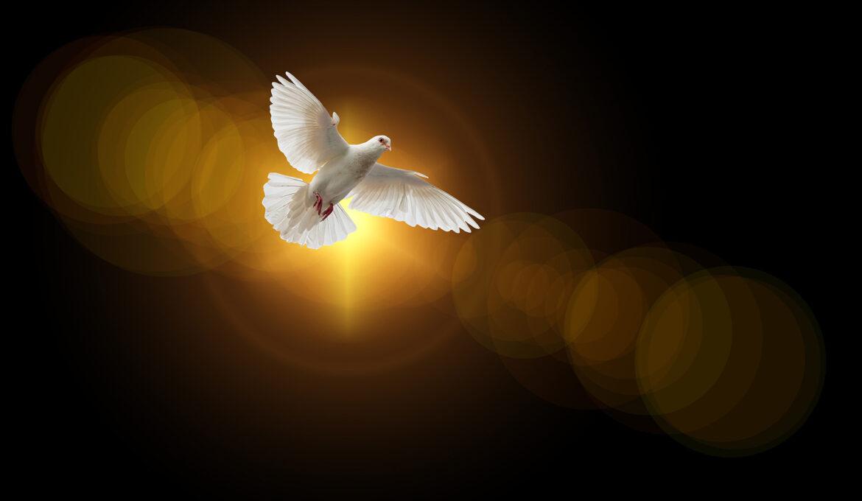 duif-geloof-pixabay