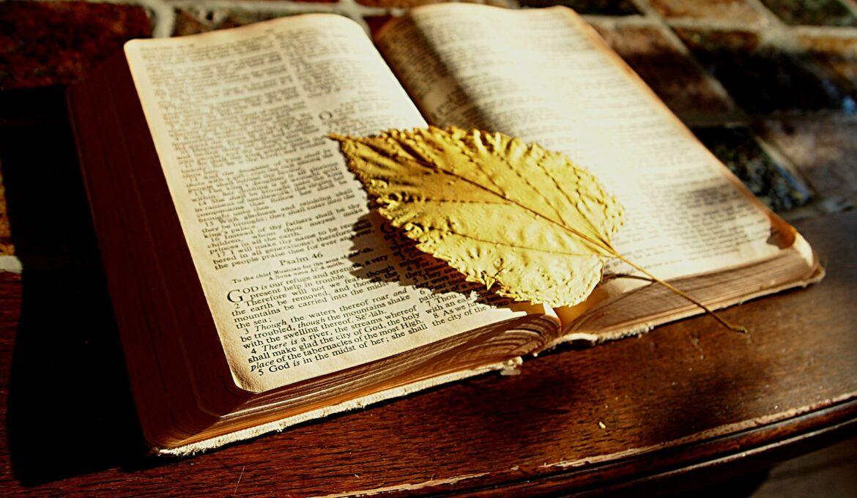 bijbel-boomblad