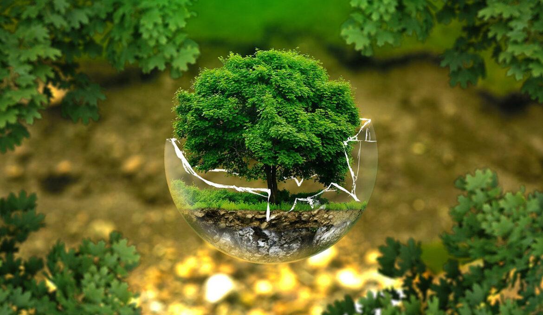 milieu-bescherming_pixabay