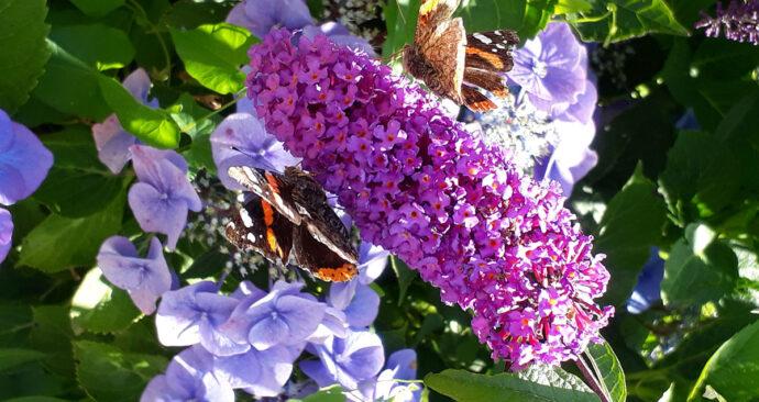ZINtijd47_header-vlinder