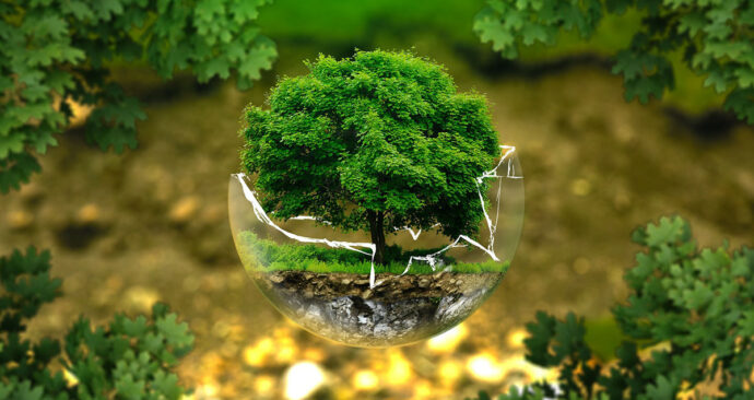 Milieu-ecologie-natuur_pixabay
